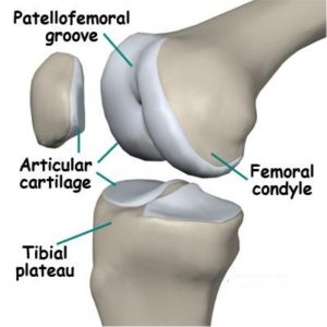knee-anatomy-img-2