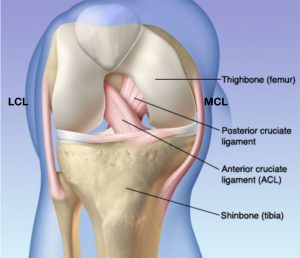 knee-anatomy-img-4